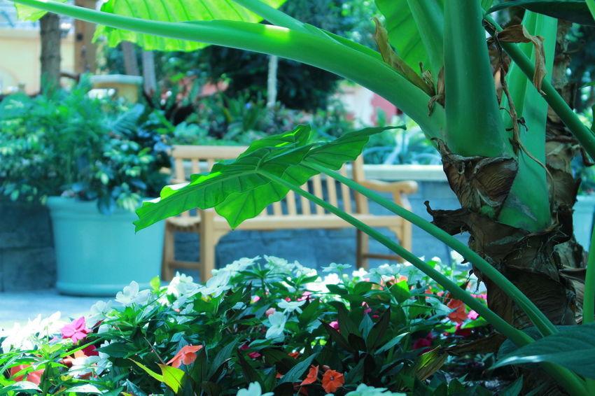 April, 2018 Orlando FL Gaylord Palms Resort Brazilian Scrapbook 2018 Lovethisplace Travel Flower Summer Plant Green Color