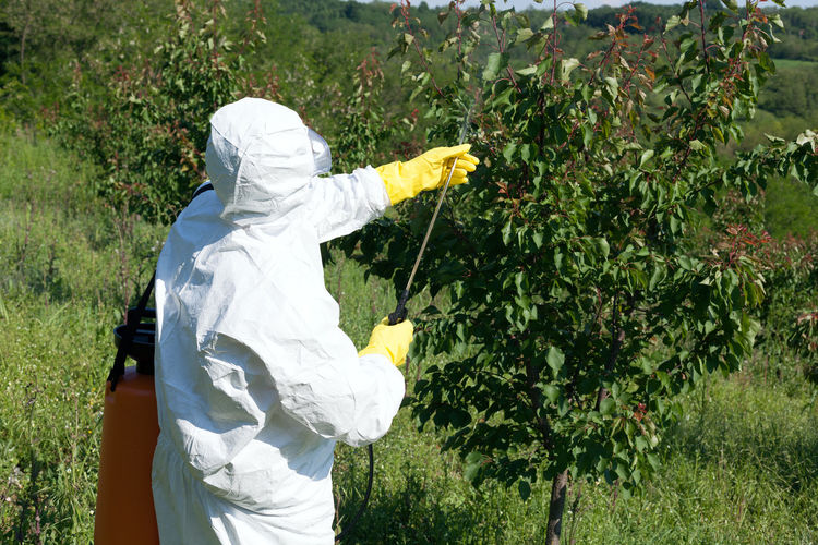 Rear View Of Person Spraying Plant