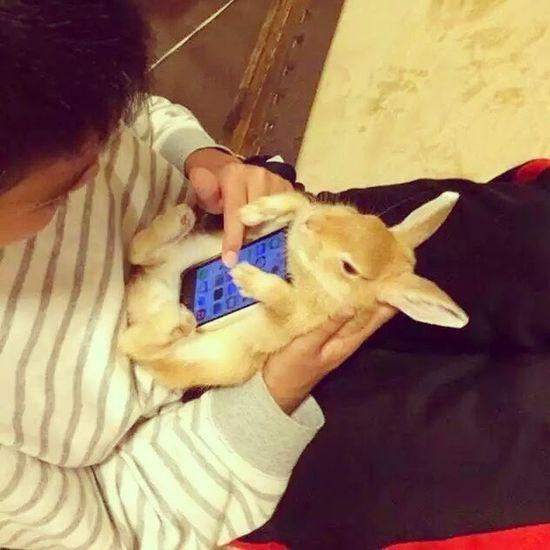 IPhone Phonecase Bunny  토끼