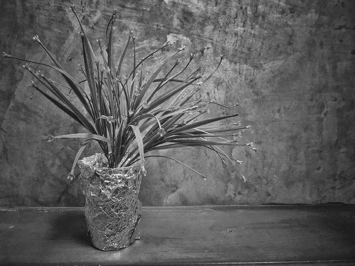 gray is background Gray Background Gray Background Vase Wall - Building Feature No People Plant Indoors  Table Art And Craft Flower Still Life Tree Flower Arrangement