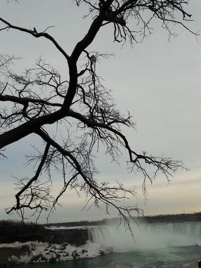 Ice Bare Tree