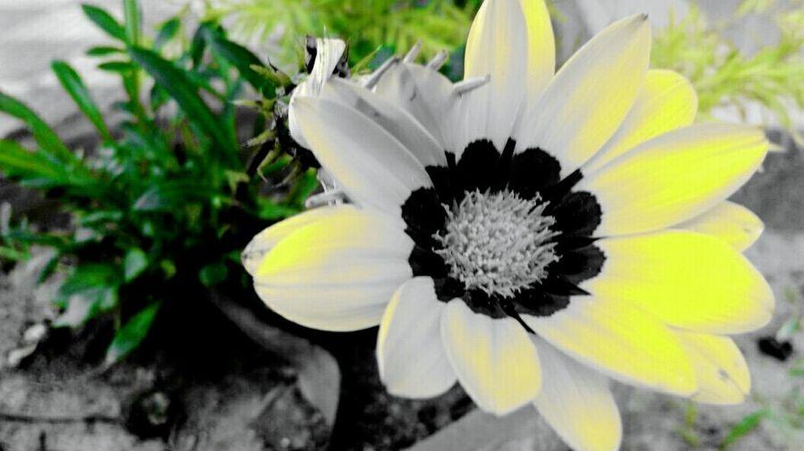 Flower Collection QueenofthenatureGreenandyellow Greenandblack Black & White 🌸🌸🌻🌻