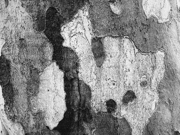 梧桐树皮。 Nature Textures And Surfaces Hugging A Tree Trees Blackandwhite Black And White EyeEm Best Shots - Black + White Monochrome Light And Shadow IPhoneography