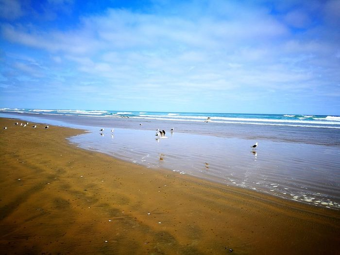 Beach Sea Sand Water Nature Beauty In Nature Blue Outdoors Birds New Zealand Walking Around Outdoor Photography No People Enjoy The Moment Love Life Horizon Over Water Thats Nature Animals