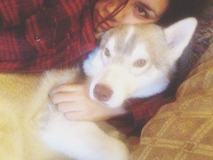Loveofmylife Husky Pets Lovehim