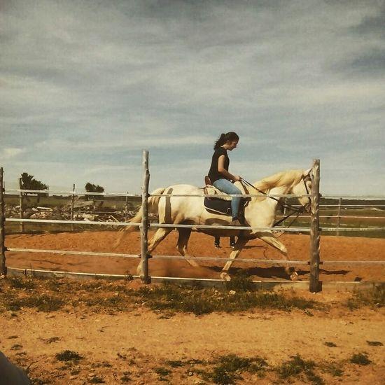 Photography Holiday POV HorseHorse Horses Sin Filtros