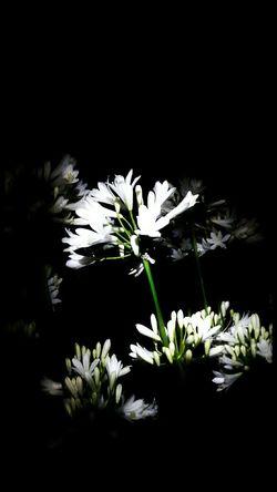 EyeEm Nature Lover White Flowers Midnight In The Garden Of Good And Evil Garden Delights