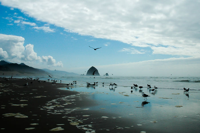 Beauty In Nature Canon Beach Cloud - Sky Flying Mid-air Nature Scenics Sky Tranquil Scene Tranquility