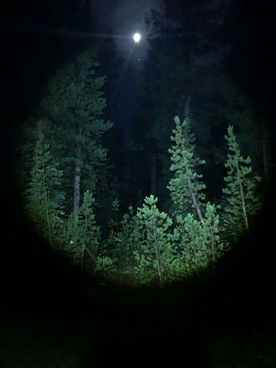 Tree Night Plant Nature Beauty In Nature Green Color Scenics - Nature Moon