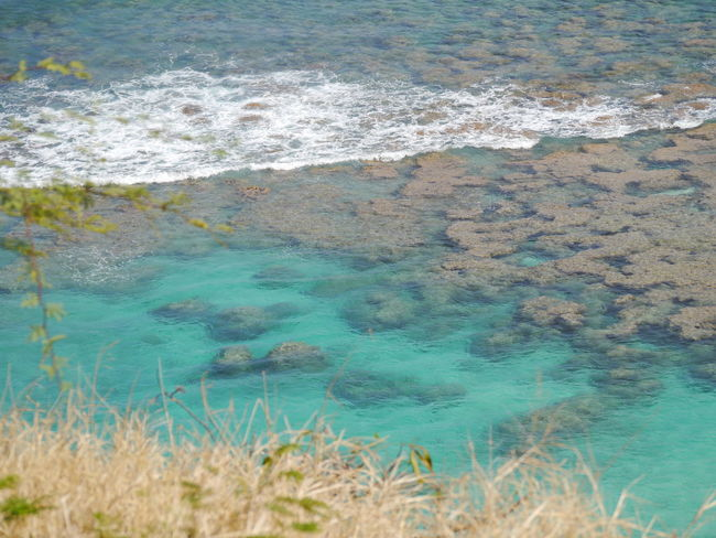 Beauty In Nature Blue Close-up Coastline Day Elevated View Grass Hanauma Bay Hanauma Bay State Park Hawaii Idyllic Nature No People Non Urban Scene Non-urban Scene Outdoors Plant Remote Rippled Scenics Tatonic Plate Water Wave