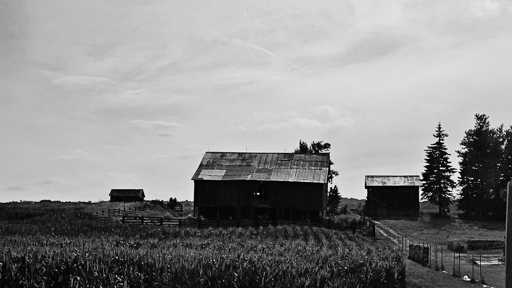 Shacks In The Country Country Shacks Sheds Barns Buildings Buildings & Sky Vintage Black White Blackandwhite Black And White Fine Art Photography Countryside Country Living Land Farming Farms Ontario Canada On The Road Scenic Landscapes Black & White Black And White Collection  Vintage Style Film Noir