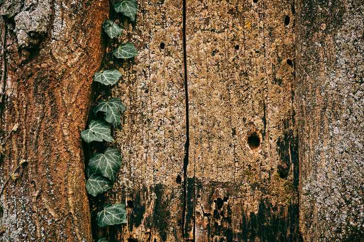 Backgrounds Brown Close-up Day Full Frame Growth Metal Nature No People Old Outdoors Plant Rough Rusty Textured  Tree Tree Trunk Trunk Weathered Wood - Material