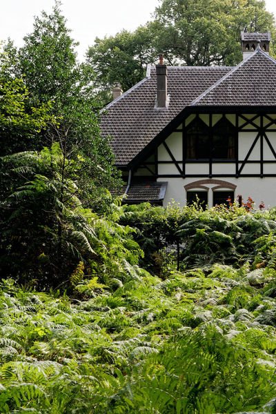 Residency Field Nature Paleis Park Plant Residential  Tree Architecture Building Building Exterior Fern Flora Forest House Leaves Outdoors Residency Roof Woods