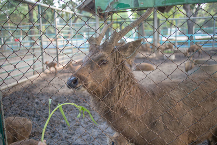 View of an animal behind fence