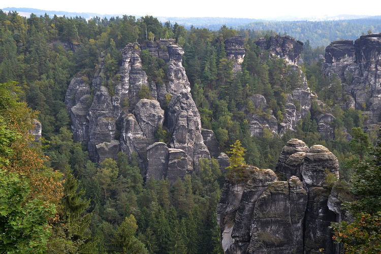 Climbing Paradise Day Elbsandstein Gebirge Famous Mount Growth Mountain Nature No People Non-urban Scene Rock Rock Formation Scenics Tourist Tourist Attraction  Tranquil Scene Tree