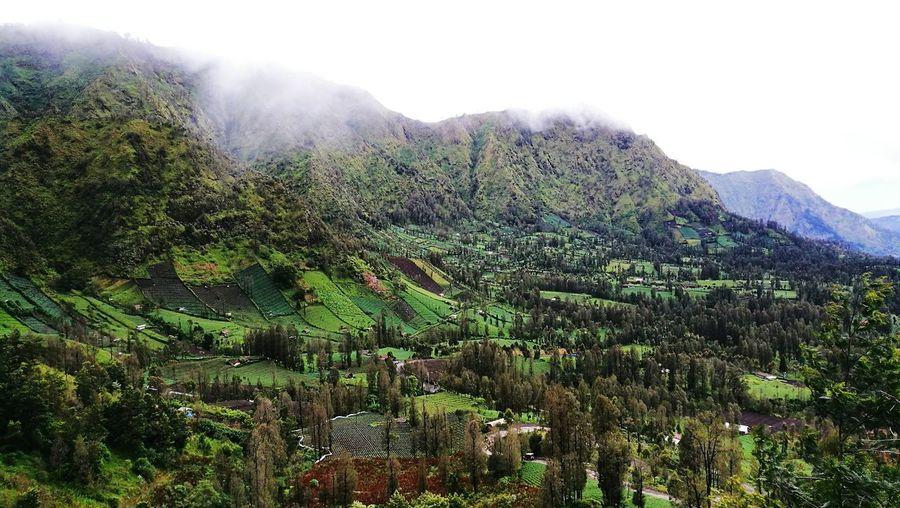 Green Rural Landscape In Indonesia