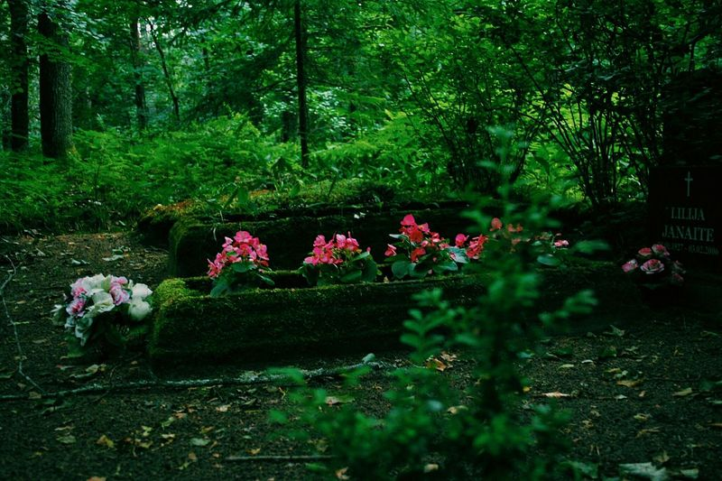 Flowers growing in forest
