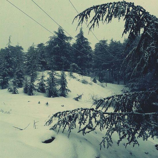 Snow ❄ Snowwhite Snowing