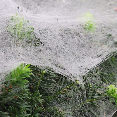 A moveable feast. Here in the morning, gone before noon. 🙄 Nature Close-up Day Spider Web Green Color Plant Part Full Frame High Angle View