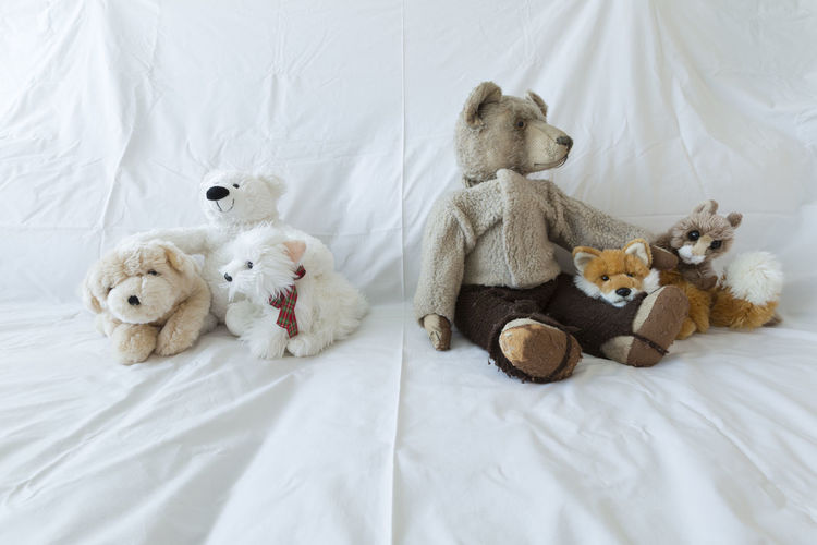 A group of cute stuffed animals on a white couch representing racial discrimination, separation and intolerance Bear Couch Plush Rat Animals Bed Bigotry Blanket Childhood Close-up Cuddly Cute Discrimination Fox Group Of Animals Group Of Objects Indoors  Intolerance Mouse No People Stuffed Toy Symbol Teddy Bear Toy White