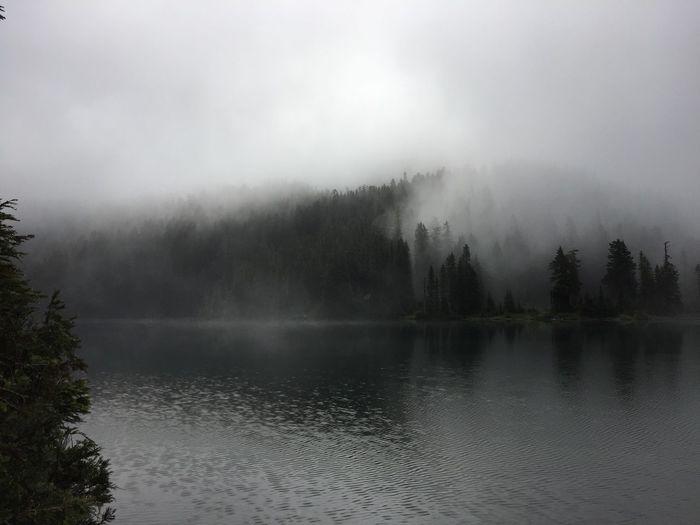 Fog river mount rainier