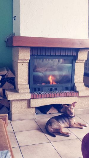 Rien de Mieux  qu'un feu de cheminée pour avoir bien Chaud?