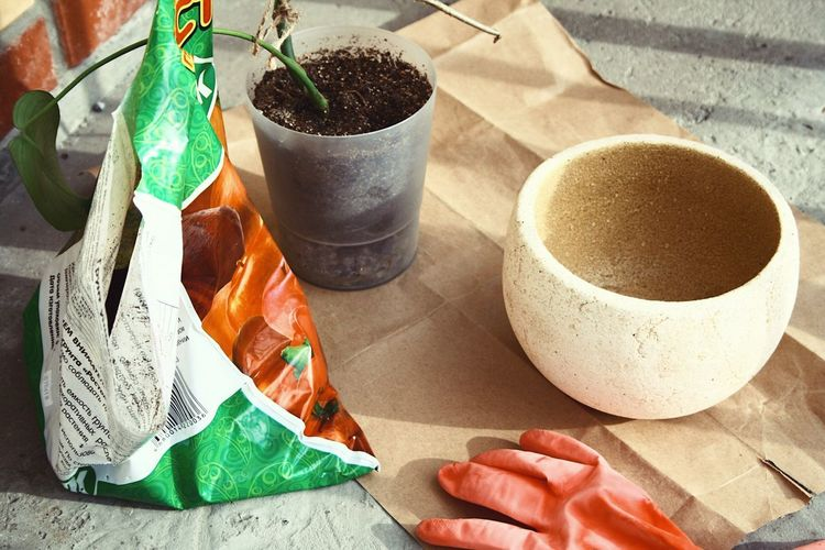 Gardening Human Hand Human Body Part One Person High Angle View Hand Cup Drink Growth Coffee - Drink Close-up Day Refreshment Indoors  Potted Plant Nature Coffee Table Food And Drink Sunlight