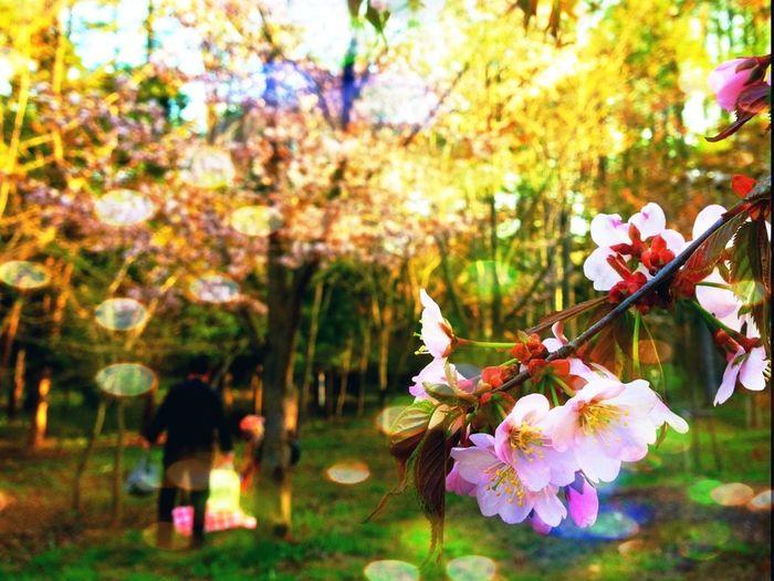Flowers Japan