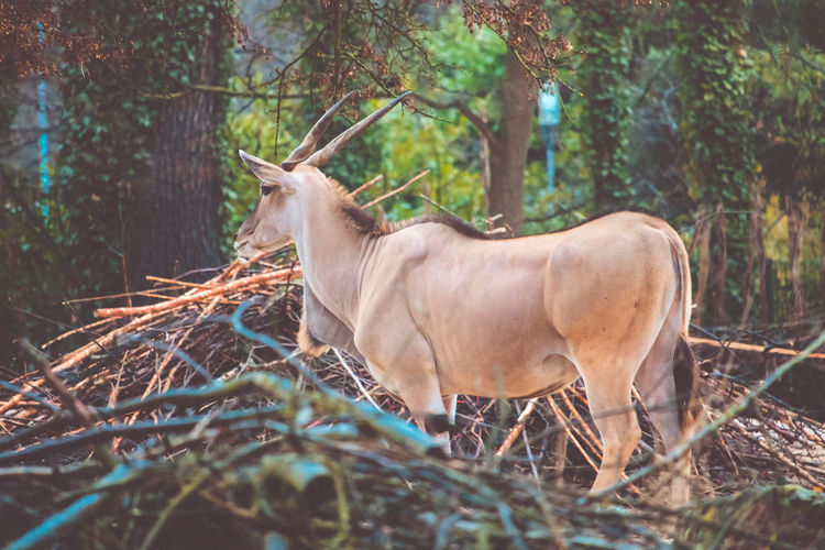 Cow standing in forest