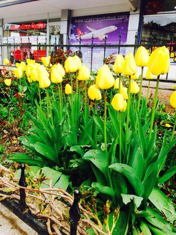 Mis Bahar sarı laleler ne Güzeldir 💐💐💐💐☺️😌💟🔱🐥🐣🐝🐞 Relaxing