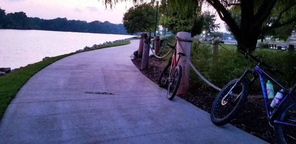 Tree Water City Lake Sunset Sky Landscape