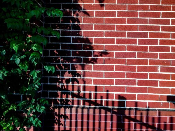 Red Built Structure Brick Wall Architecture Outdoors Day Building Exterior No People Tree Longview, Tx Bricks Shadow Green Wall