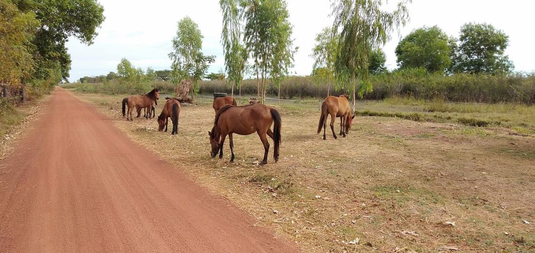 Tree Rural Scene Togetherness Agriculture Sky Livestock Landscape Grazing Horse Pony Pasture Flock Of Sheep Cow Medium Group Of Animals Working Animal Herd Group Of Animals Horseback Riding Herbivorous Farm Animal Cattle Bridle Mane