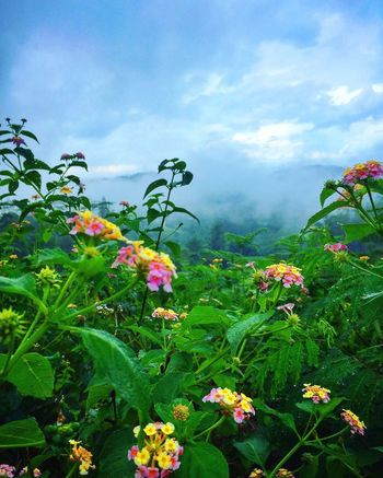 Travel Destinations Flower Growth Plant Nature Beauty In Nature Leaf Green Color Outdoors Sky Cloud - Sky Petal Day Blooming Freshness Flower Head Tourism Scenery Fog Mountain Scenics Osmeña Peak Cebu City, Philippines