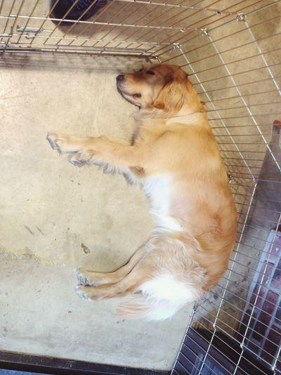 Always sleeping Ari, he is being a mascot near here~!