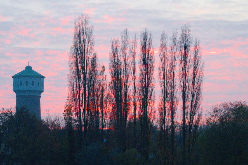 Waserturm in Edigheim. Bäume Himmel Sonnenuntergang Turm Wasserturm Beauty In Nature Cloud - Sky Kontrast Sky Sunset Tranquility Tree