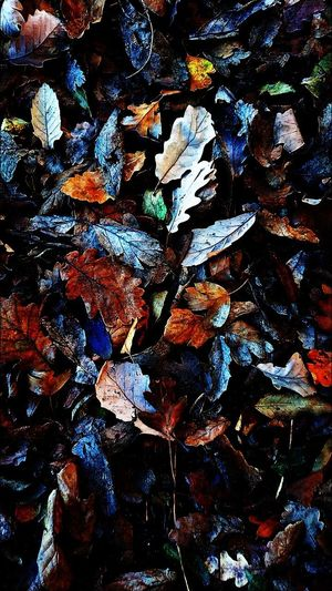 Full Frame Backgrounds Abstract Multi Colored No People Close-up Day Outdoors Autumn Colors Autumn Leaves Background Texture Autumnal Mood Nature Hampstead Heath Hampstead London Hampsteadheath Golders Hill Park Nature On Your Doorstep Patterns In Nature Autumn 2017