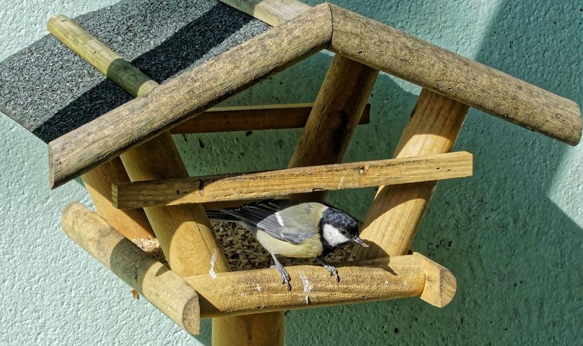 Close-Up Of Bird On Bird Feeder