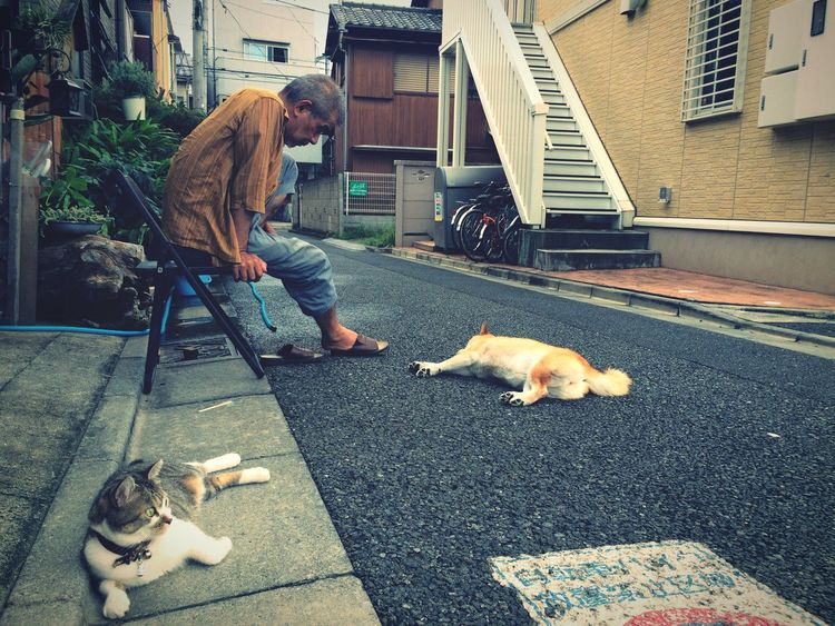 An Oldman with his Cat & Dog on a Hot Summer Day in Setagaya , Tokyo,Japan