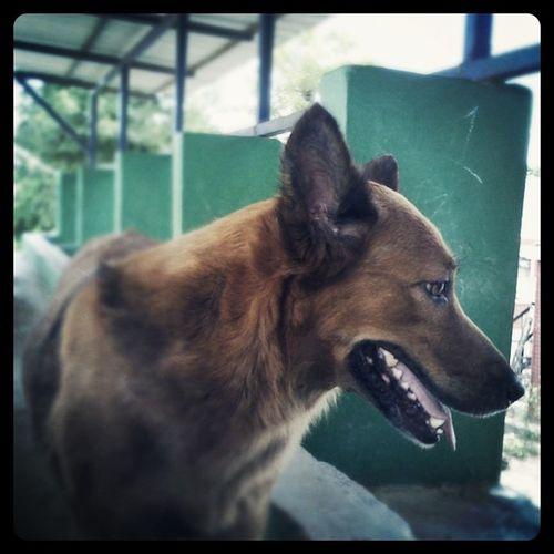 Dog Iphongraph Iphonephoto Yeswitha3G