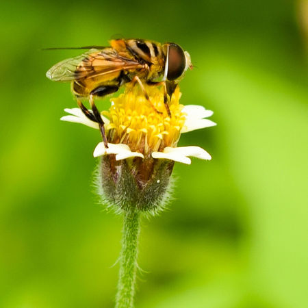 Macro Bee 🐝 Bee Nature