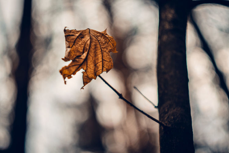 Exceptional Photographs Silhouette EueEm Nature Lover Bokeh Photography Bokehlicious WoodLand Poland Spacer Leaf Autumn Branch Change Dry Close-up Leaf Vein Autumn Collection Dead Plant Maple Plant Life Driftwood Dead Tree Blooming