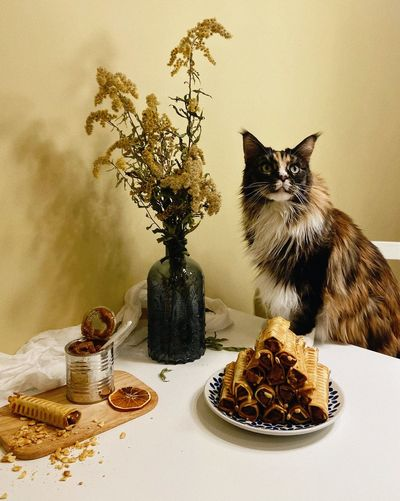 View of cat on table