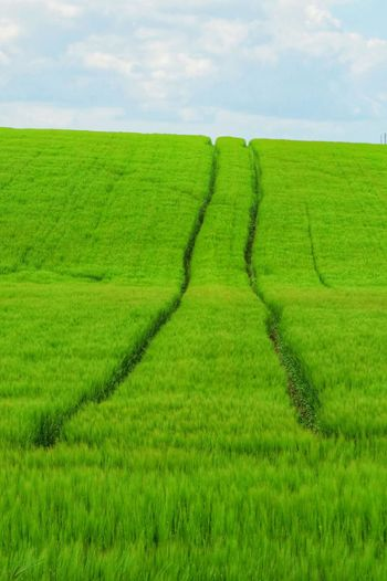 Green Color Landscape Land Rural Scene Plant Field Growth Crop  Agriculture Farm Nature Beauty In Nature