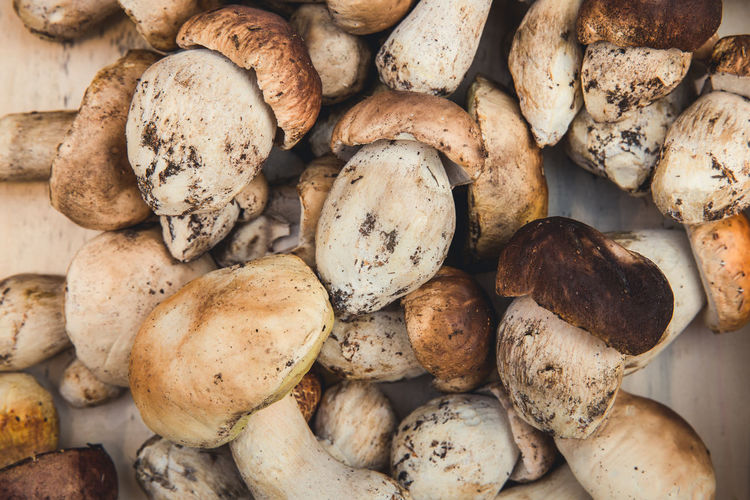 Alto Adige Market Porcini Mushroom Porcini Mushrooms Backgrounds Brown Close-up Directly Above Edible Mushroom Food Food And Drink For Sale Freshness Full Frame Fungus Healthy Eating Large Group Of Objects Mushroom No People Potato Raw Food Still Life Vegetable Wellbeing