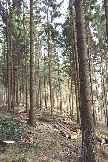 Forrest