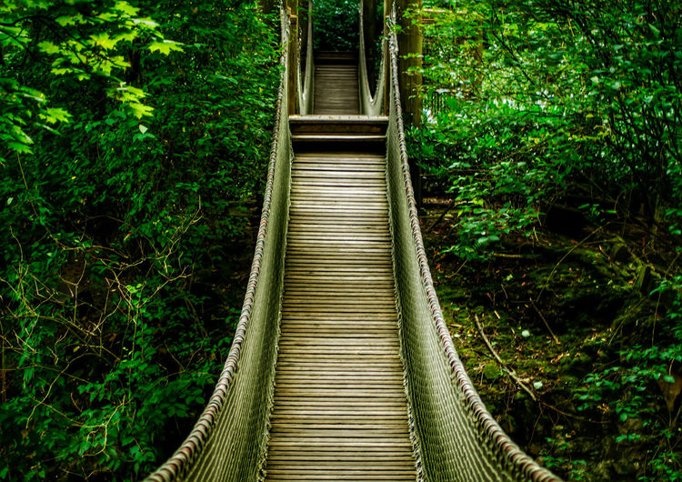 Rope bridge amidst trees in forest
