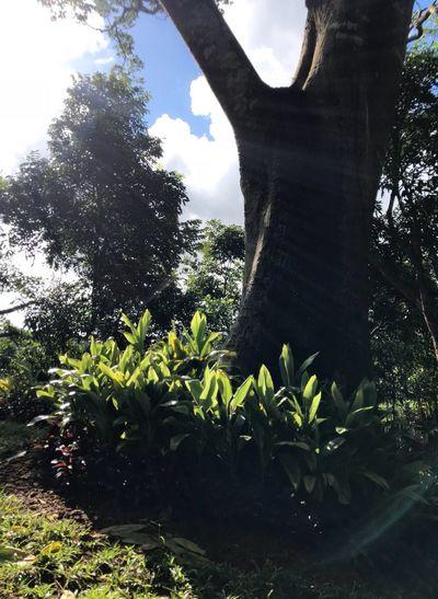 foliage at