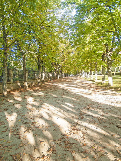 Urban park in autumn in Hervas, Caceres, Spain Autumn Beauty In Nature Day Green Color Growth Nature No People Outdoors Park Relax Scenics Shadow Sky Sunlight Taking Photos Tranquility Tree Tree Trunk Trees Urban Urban Geometry Urban Transportation Urbanphotography