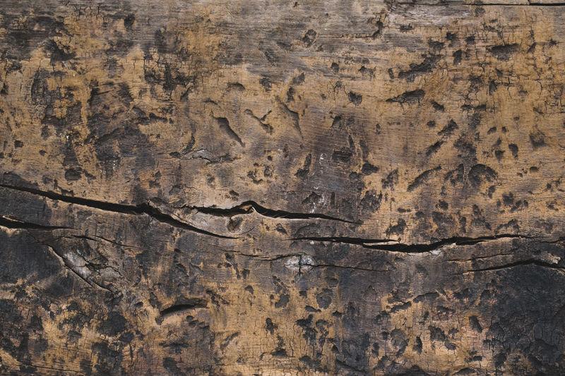 Holz Holztextur